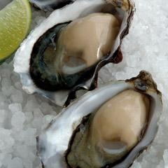 Rockwall - Oysters